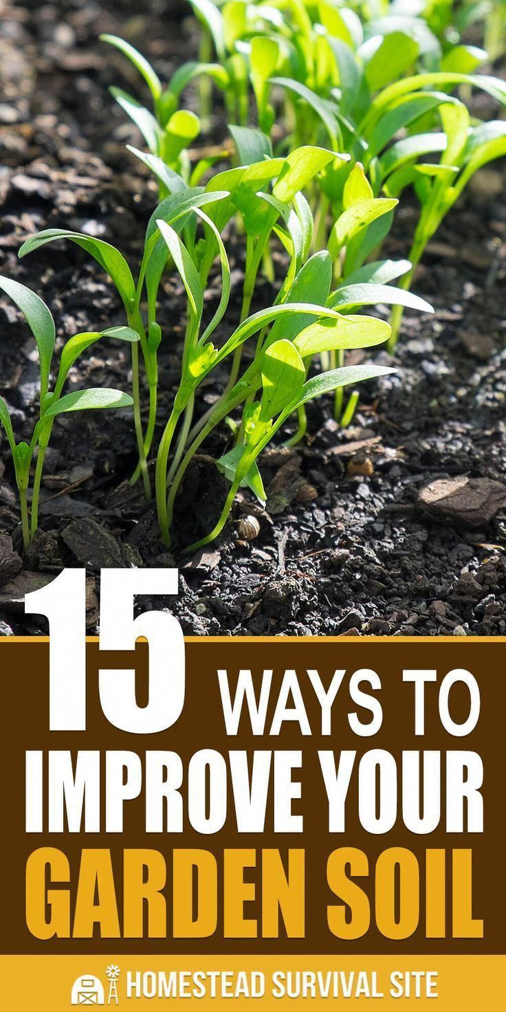 Improving The Quality Of The Soil In Your Garden Is Both Simple And Complicated It S Less Work Than You Think But T Soil Improvement Garden Pests Garden Soil