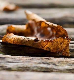 Herfstkleuren - bladeren harken