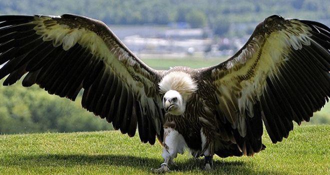 Dünyanın En Büyük 5 Kuşu