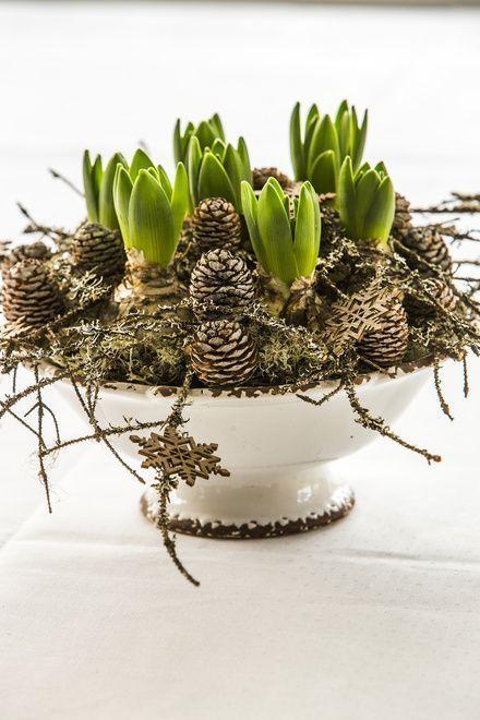 Floradania Marketing: Warm gemütlich mit Zwiebelblumen – Blumen Dekoration – #B…