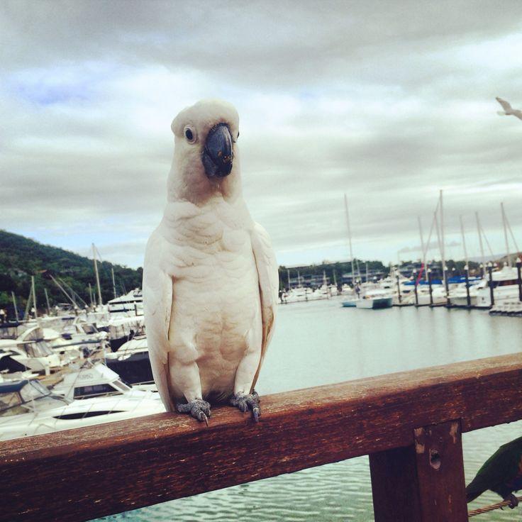 Lunch guest on hamilton island