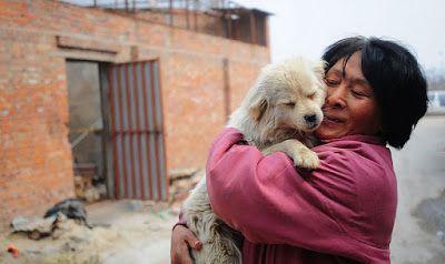 Yang Xiaoyun, una profesora retirada de 65 años decidió viajar más de 2400 kms hasta Yulin (China) y gastarse casi 1000 € para salvar a 100 perros de ser sacrificados en un cruel festival  #StopYulinFOREVER