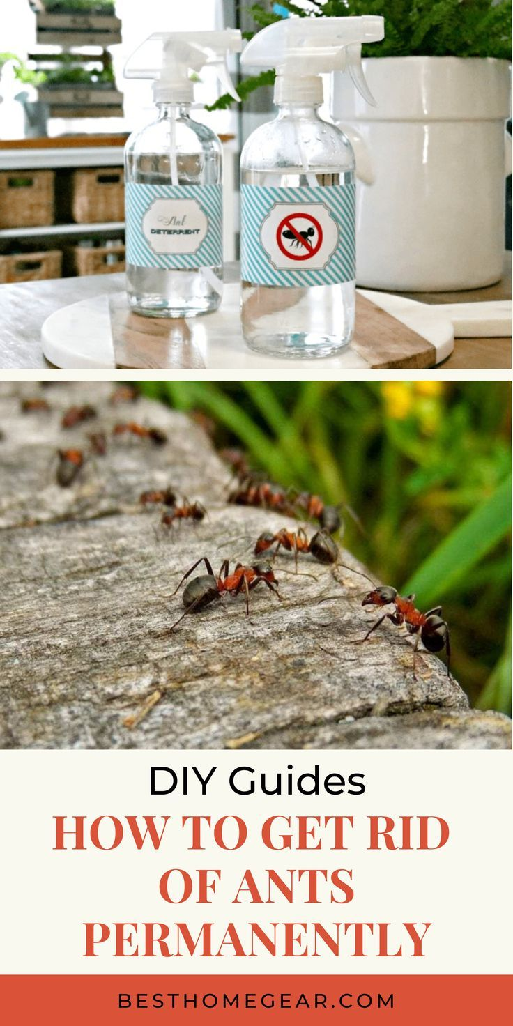 How To Get Rid Of Ants Permanently The Quickest Way To Get Rid Of Ants In Your Home Diy Diyguide Guide Doityou Get Rid Of Ants Rid Of Ants How To