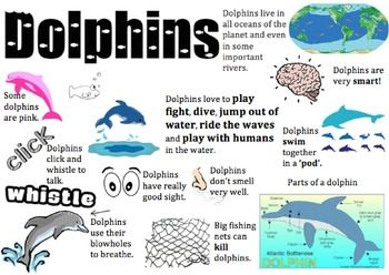 I used this dolphin information placemat to support my lower readers when sourcing information for a report on dolphins. It's really handy if you can't get your hands on low texts.