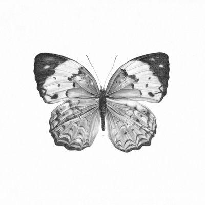 #Butterfly #Illustration #Black and White by by HermesGC
