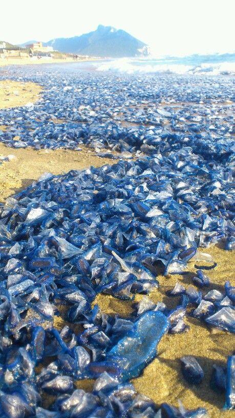 Blu dune .........Sabaudia Italy