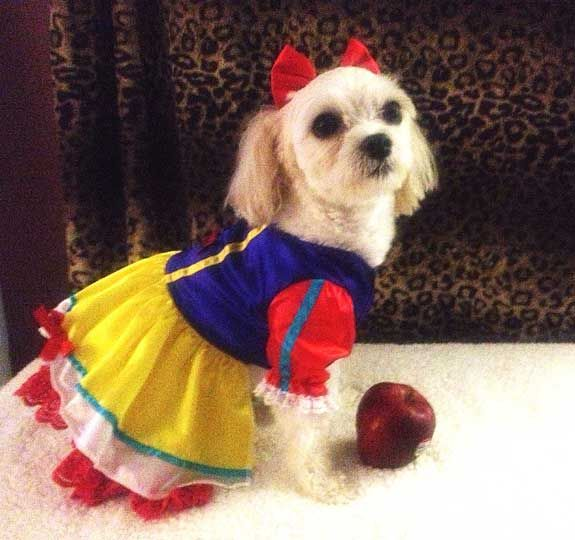 Our dog Halloween costumes collars and accessories are the coolest. Our innovative dog costumes will make your pup the hit of the party. & 216 best My puppyu0027s images by Karrie Williams Lang on Pinterest ...
