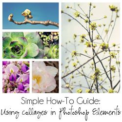 Easy to follow tutorial on using photo collage templates in Photoshop Elements. Link to FREE collage template download included.