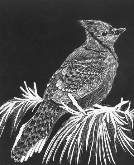 Scratch art bluebird