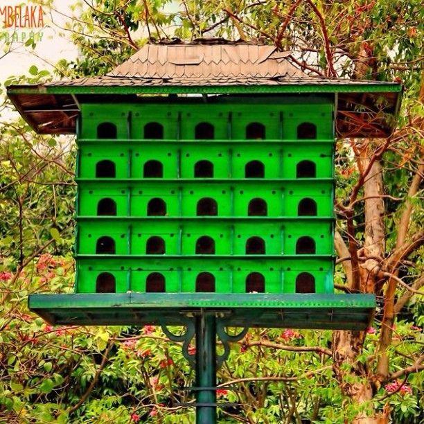 Birds Home #hdr #hdrlovers #hdrindonesia #hdrpict #jakarta #monas #bird #nest @bestshooter @Irawan Fotonesia #instapic #instacool #instagramers #igers #instagram
