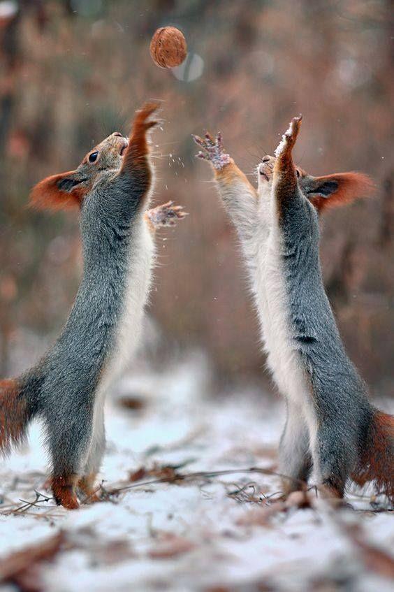 animaux / rongeur / écureuil / mignon