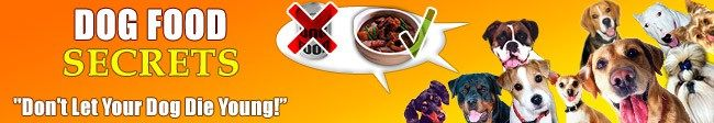 The Most 5 Dangerous Foods for Your Dogs & What Dog Food Advisors Say