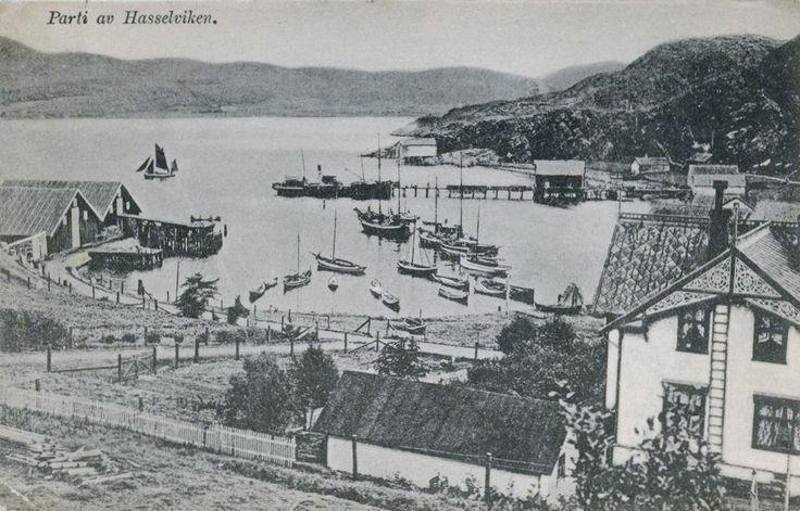 Hasselviken (Hasselvika) Rissa kommune, Nord-Trøndelag.Bebyggelse og fiskebåter. Stemplet 1916