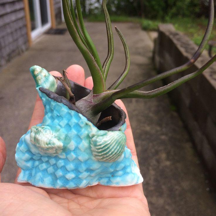 Tiny air plant holder with seashells!