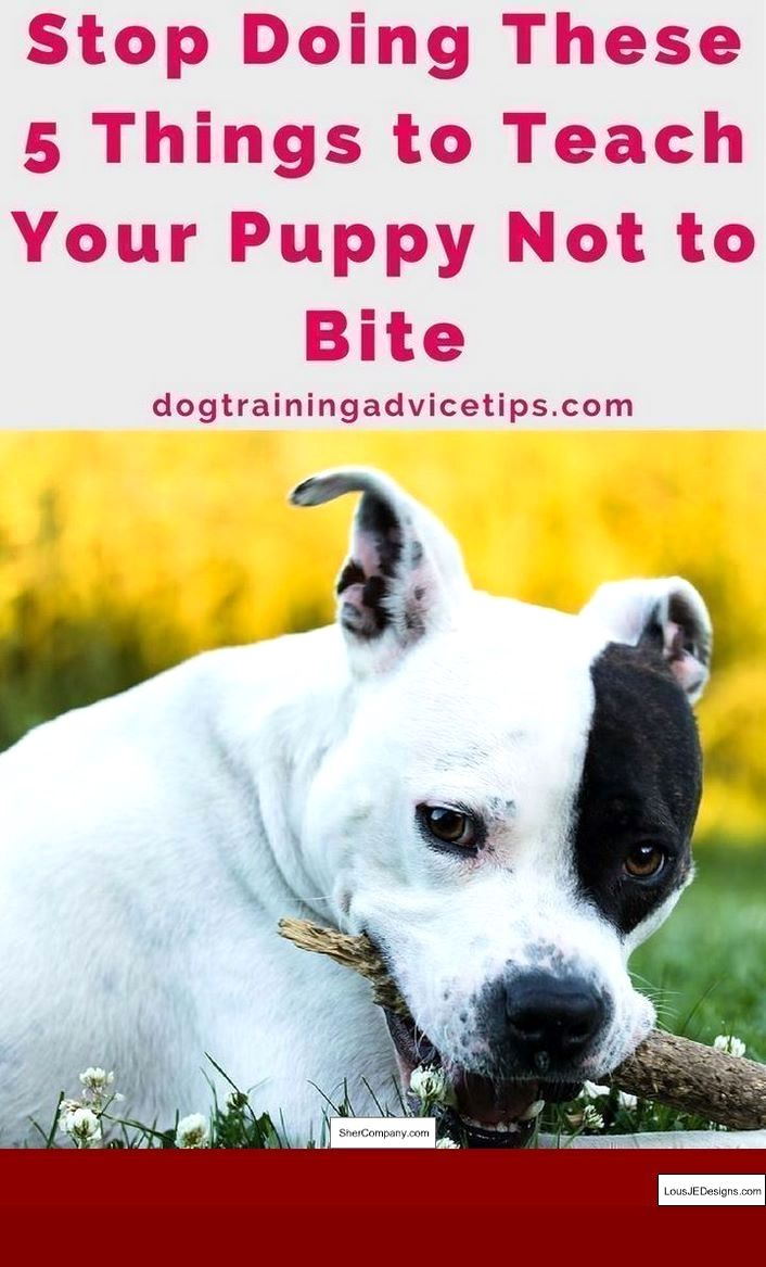 How To Train Your Dog To Fetch His Leash And Pics Of How To Train