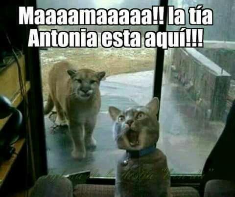 Acios