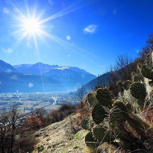 Reposting @fullytourisme: Un petit air de printemps... . . . #valais #wallis #swiss #schweiz #suisse #switzerland #cactus #Follatères #sun #soleil#nature #explore #tourism #tourisme #winter #hiver #blue #white #beautiful #amazing #photooftheday #picoftheday #visitswitzerland #switzerland_vacations#inlovewithswitzerland #neverstopexploring #ourplanetdaily by @ le_dahu_photographe