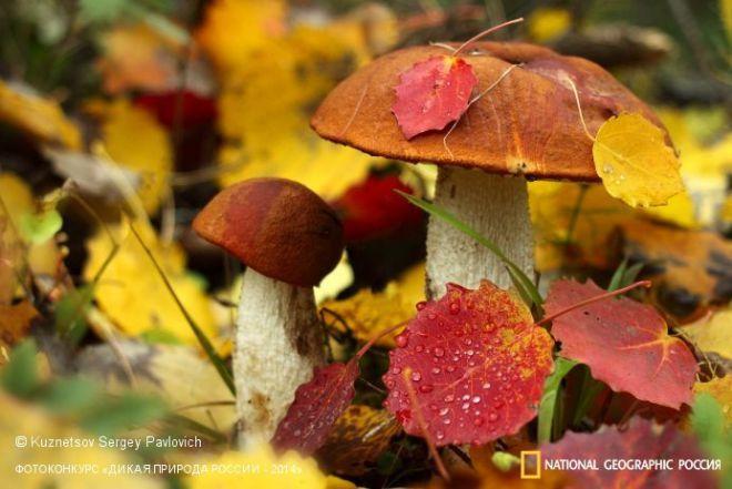 Лучшие фотографии первозданной природы с фотоконкурса «Дикая природа России-2014» | Современное искусство