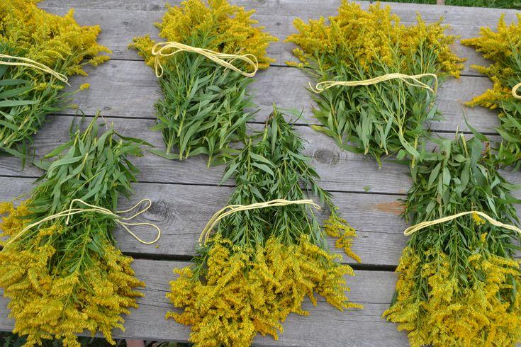Golden Rod Flowers