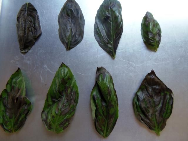 Have more basil in your garden then you know what to do with? Here's how to freeze it for year-round use: