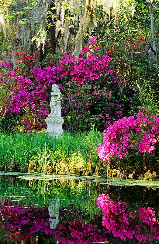 17 best images about s o u t h e r n g r a c e on pinterest southern plantations magnolias for Magnolia gardens charleston sc