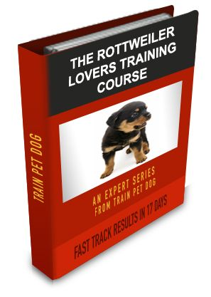 Rottweiler Training: Learn All About Training Rottweilers & Taking Care of Them