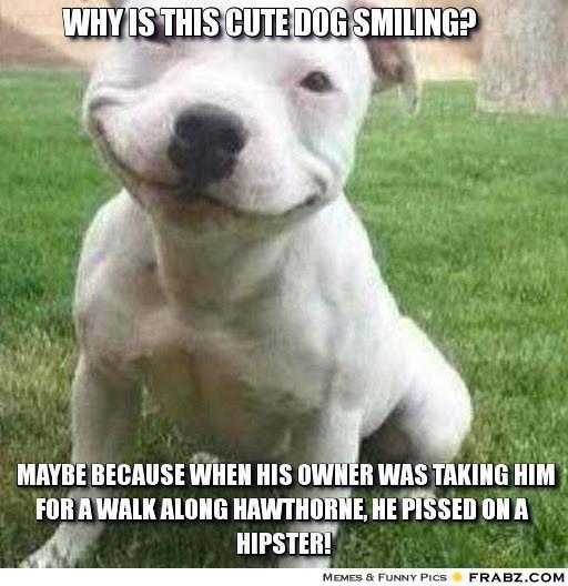 Dog smiling meme - photo#41