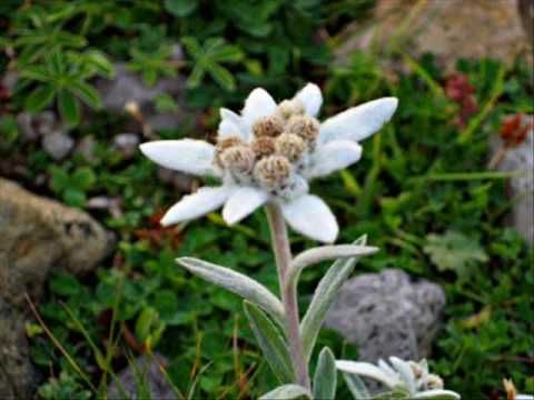 André Rieu - Edelweiss ( take your pick, another beauty!) Gorgeous video!