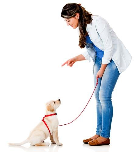 The Lowdown on Training Collars for Dogs: What We Know in 2016? - Top Dog Tips - Visit us at https://www.alphadogcollars.com/   for More Updates
