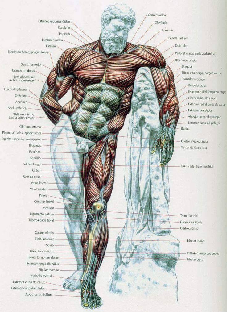 Para conhecer melhor os músculos que compõem o corpo humano e entender melhor o músculo trabalhado em cada exercício, segue mapas dos múscu...