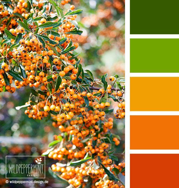 Die besten 25+ Orange farbe Ideen auf Pinterest Orange
