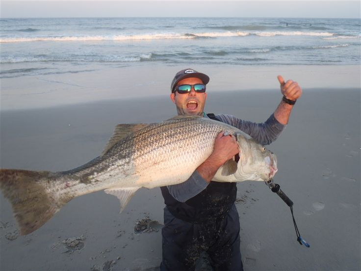 314 best striped bass pics images on pinterest saltwater for Fishing for stripers