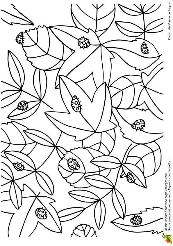 Coloriage cache cache feuilles coccinelles sur Hugolescargot.com - Hugolescargot.com