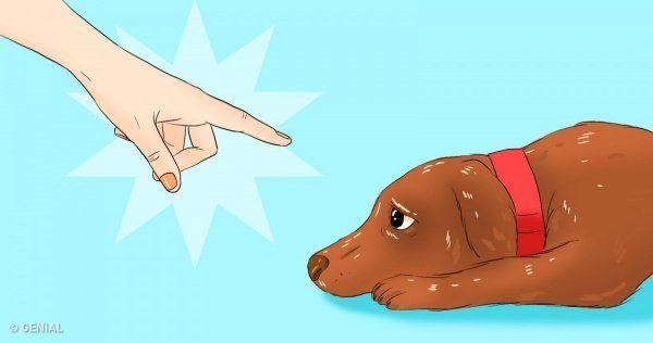 Cosas Perjudiciales Que Puedes Estar Haciéndole A Tu Perro Sin Siquiera Darte Cuenta Perros Lenguaje De Los Perros Gatos Y Perros Divertidos