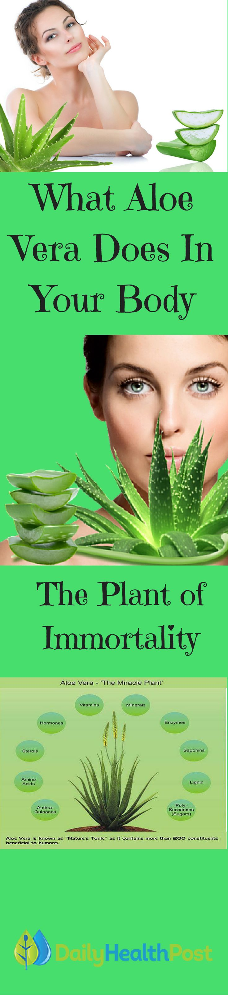 Aloe Vera is commonly thought of as a cute and easy to care for plant that instantly brightens any home.  And while the succulent has become more popular in American homes, many people don't realize that their decorative plant actually contains amazing healing properties.     In fact, the plant, also known as Aloe Barbadensis, has been used for thousands of years throughout the world. Find out more...