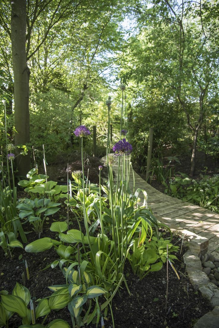 Rewela Cottage, Skewsby, Yorkshire, YO61 4SG – National Garden Scheme