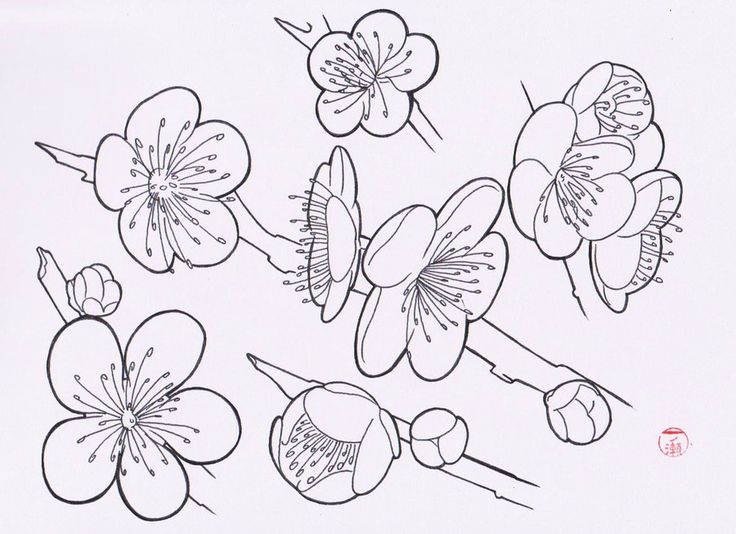 Japanese Sakura Drawing Easy Japanese Flowers Drawings Sakura