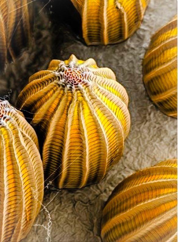 Jojo Post Micro Butterfly Eggs Under An Electron
