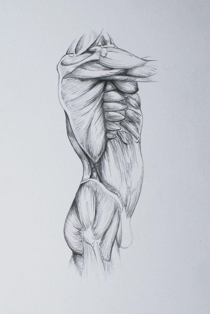 64 best Larynx Anatomy images on Pinterest | Anatomy, Anatomy ...