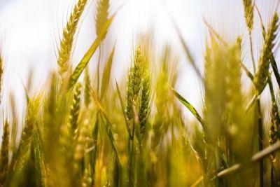 Prima prognoză a anului despre producţia agricolă http://www.antenasatelor.ro/calendarul-gospodarului/8167-prima-prognoza-a-anului-despre-productia-agricola.html