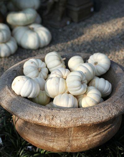Charming White Pumpkins  http://www.pinterest.com/pin/15199717467457436/