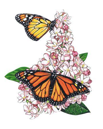 MARILYN BARKHOUSE   Monarch Butterfly II