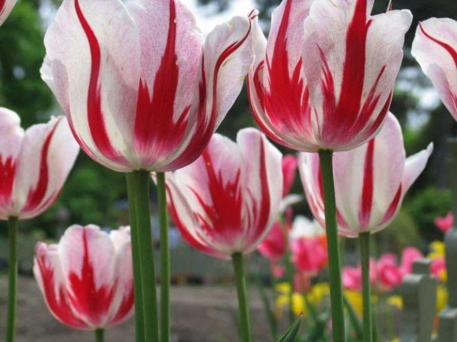 Kumpulan Gambar Bunga Kartun 20 Gambar Sketsa Kumpulan Gambar Sketsa Bunga Pemandangan Galeri Gambar Bunga Anggrek Ya Gambar Bunga Bunga Tulip Bunga Kertas