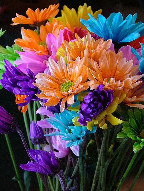 Flowers in a rainbow of colors. Very pretty!