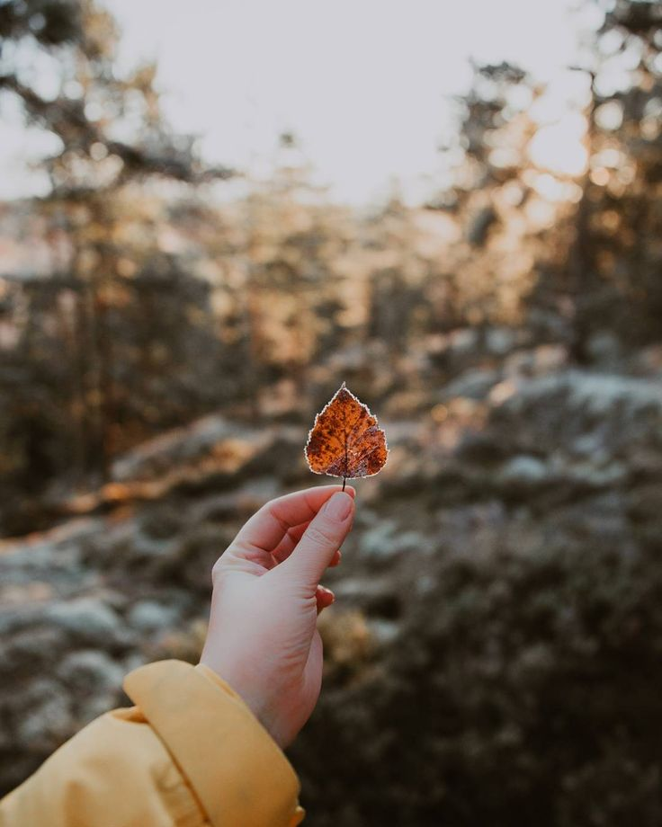 Crisp air, pretty leaves and hot coffee. I love fall! 🍂  .  .  #ourfinland #thisisfinland #visitfinland #discoverfinland #retkipaikka #suomiretki #fallintofinland #outdoorfinland #moodygrams #ig_finland #visitespoo #folkgreen #ruska #autumn #livefolk #WHPseasons #nuuksio
