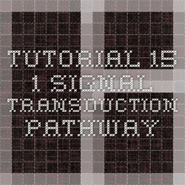Tutorial 15.1 Signal Transduction Pathway