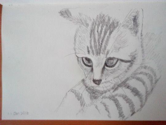 Cat sketching practice  #003