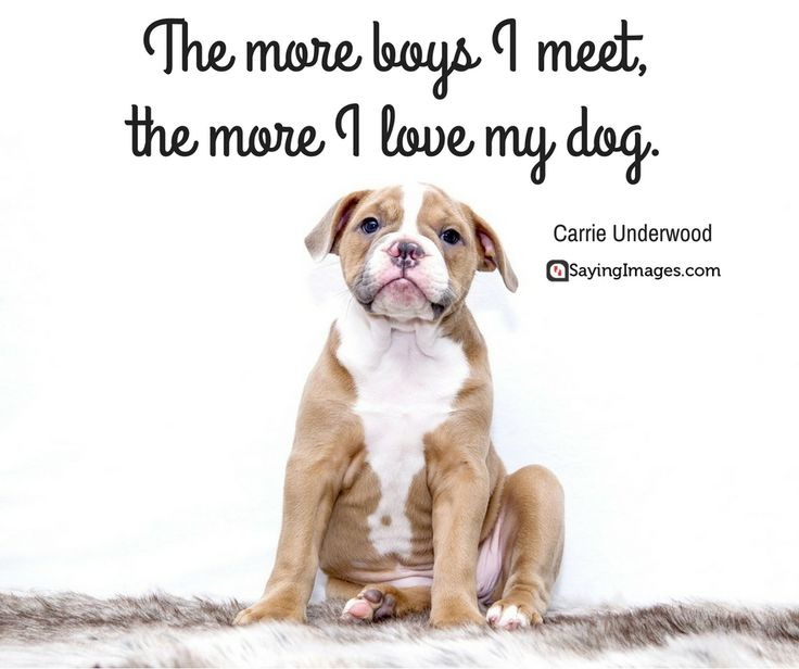 Happy Birthday Dog Quotes ~ Best cute quotes images on pinterest qoutes
