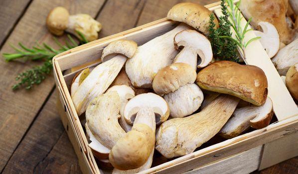 Pilze sammeln: Wie, wo und wann