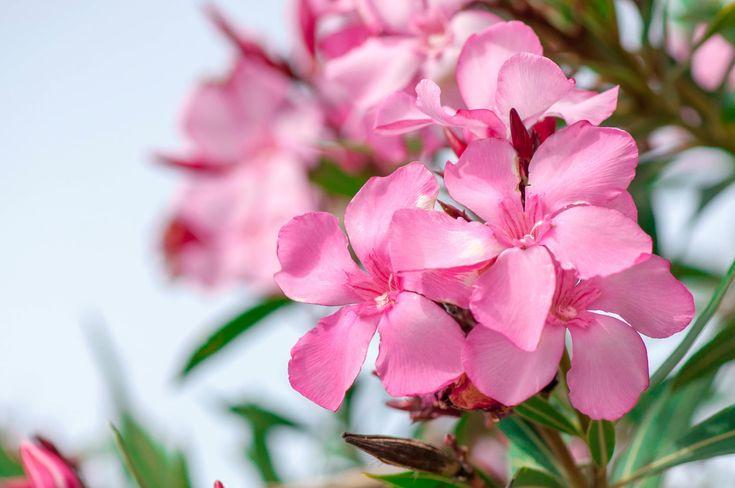 Experten Warnen Vor Gefahr Fur Kinder Durch Giftpflanzen Im Garten Giftpflanzen Pflanzen Garten